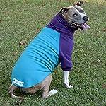 Tooth & Honey Dog Sweater/Pitbull/Large Dog/French Bulldog/Colorblock Sweatshirt/Pullover 9