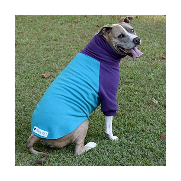 Tooth & Honey Dog Sweater/Pitbull/Large Dog/French Bulldog/Colorblock Sweatshirt/Pullover 2
