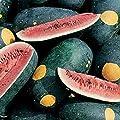 "Moon & Stars Watermelon Seeds (Red Flesh) - Even the foliage has yellow ""stars""."