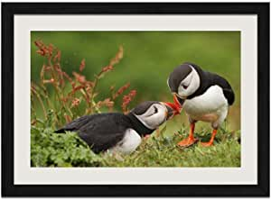 Puffin Framed Photo Hand Framed Wildlife Print Puffin On Cliff