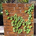 Brick Peel and Stick Wallpaper Textured Self-Adhesive 3D Boston Ivy Plant Décor Film Contact Paper Roll 17.7in x 16.4ft-Orange
