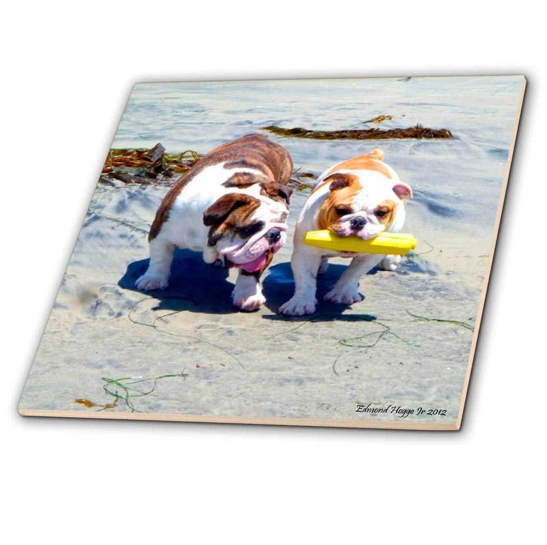 12-Inch 3dRose ct/_46505/_4 The English Bulldog Stroll-Ceramic Tile