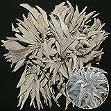 200pcs California White sage Seeds Sacred salvia apiana Ceremonial aromatics zn