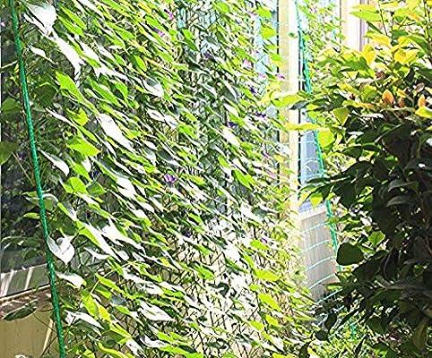 Red Mitefu multiusos PE, para plantas, cargas pesadas, jardín, cría de aves, red anti-pájaros en cancha de tenis, 6 cuerdas: Amazon.es: Jardín
