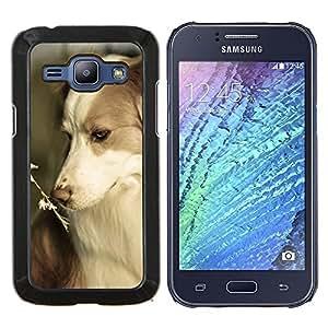 TECHCASE---Cubierta de la caja de protección para la piel dura ** Samsung Galaxy J1 J100 ** --Border collie Corgi mascotas verano perro Naturaleza