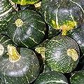 BonBon Hybrid Winter Squash Garden Seeds - Non-GMO - Vegetable Gardening Seed - Bon Bon