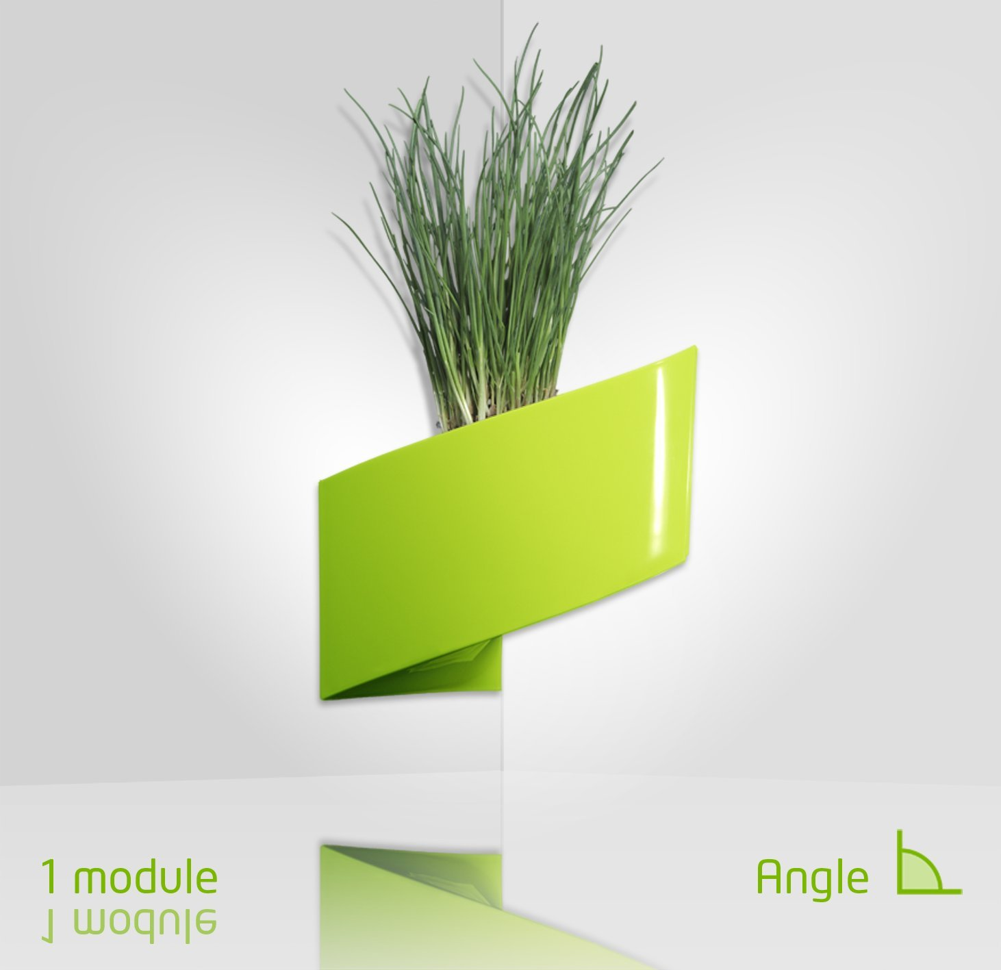 plante verte exterieur en pot kalanchoe plante avec vase. Black Bedroom Furniture Sets. Home Design Ideas