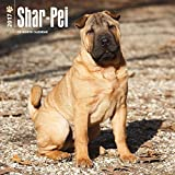 Shar-Pei Wall Calendar Dogs 2017 {jg} Best Holiday Gift Ideas - Great for mom, dad, sister, brother, grandparents, , grandchildren, grandma, gay, lgbtq.