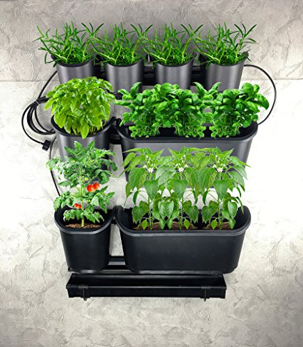 Watex Urban Farming Vegetable And Fruit Starter Kit With