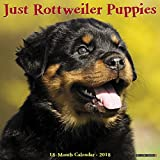 Just Rottweiler Puppies 2018 Calendar