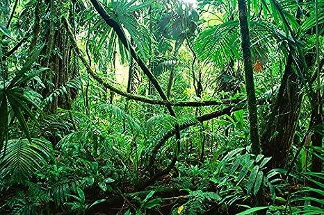 Amazon Com Reptile Habitat Terrarium Background Deep In The