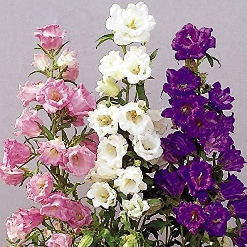 国華園 種 花たね つりがね草 カップ&ソーサーミックス 1袋(50mg)/メール便配送