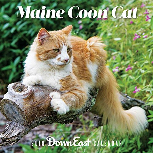 Maine Coon Cat: 2018 Down East Calendar