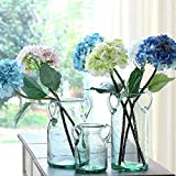 Noah Decoration Hand-Blown and Handmade Double Ear Stained Bubble Glass Flower and Filler Vase for Home and Wedding Indoor and Outdoor Decoration Medium