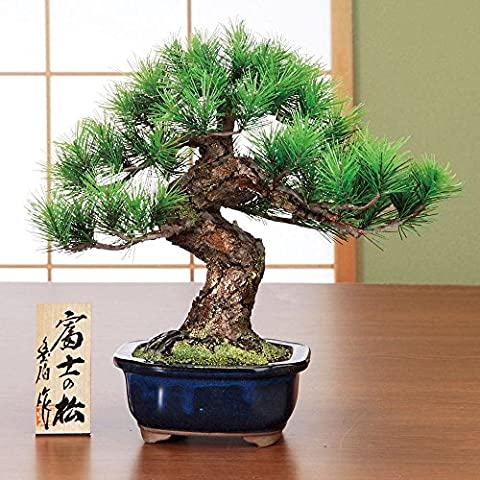 Replica pine crafts bonsai Fuji Suzuki Toyohaku auspicious JAPAN - Suzuki Replica