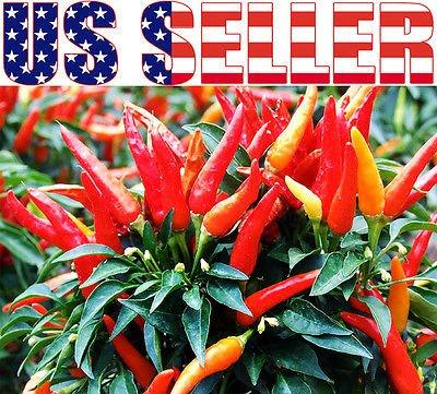 30+ ORGANICALLY GROWN Candlelight Pepper Seeds Heirloom RARE NON-GMO Ornamental