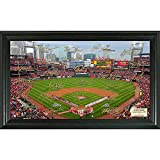 MLB St. Louis Cardinals Signature Field, Black