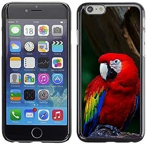 YOYO Slim PC / Aluminium Case Cover Armor Shell Portection //Cool Parrot //Apple Iphone 6 Plus 5.5