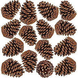 "besttoyhome 15 PCS Natural Pinecones Medium Pine Cones Ornaments Real Preserved Pine Cones - Dried -3""- 4"" Tall for Guest Seating Place Card Holders or Wedding Guest Favors Christmas Winter Xmas"