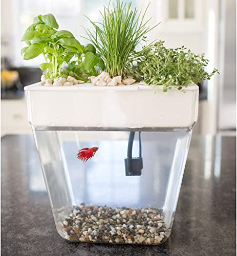 Back-to-the-Roots-Water-Garden-Self-Cleaning-Fish-Tank
