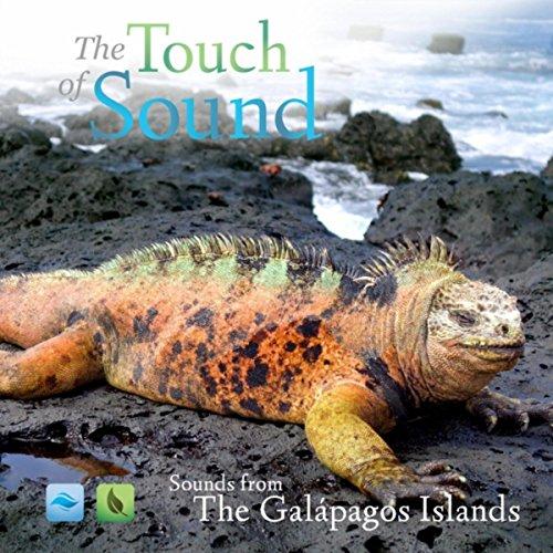 Fur Seal Islands - Fur Seal Pup (Santiago Island)