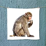 L-QN microfiber towelmacaque macaca sylvanus isolated over white with shade Excellent Water Absorbent Antistatic W13.8 x W13.8