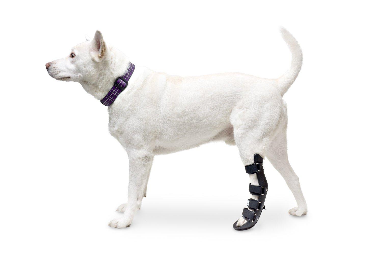 Amazon.com : Walkin\' Pet Splint for Dog, Canine Rear Leg : Pet Supplies