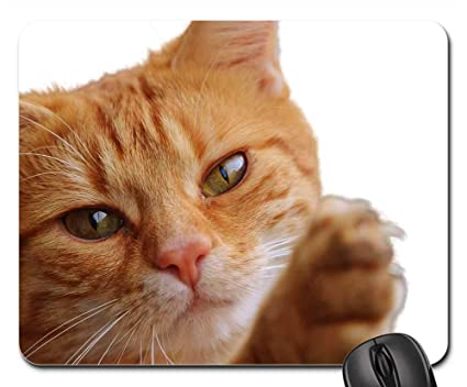 Amazon.com : Mouse Pads - Cat Isolated Feline Render Png Pet ...
