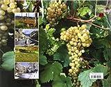 Sulla strada del vino Prosecco e vini dei colli Conegliano e Valdobbiadene. Ediz. italiana e inglese
