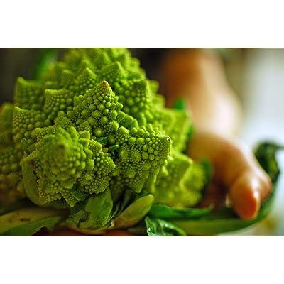 GL Seeds Broccoli Romanesco Natalino Organic : Garden & Outdoor