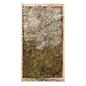 Placa de plata de/musgo Mix en la caja de madera, pequeño