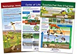 """NewPath Learning """"Ecology"""" Bulletin Board Chart Set (Pack of 3)"""