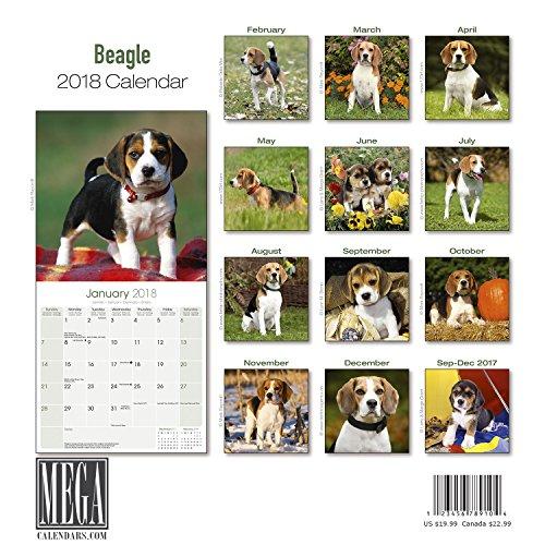Beagle Calendar 2018 - Dog Breed Calendar - Premium Wall Calendar 2017-2018 Photo #3