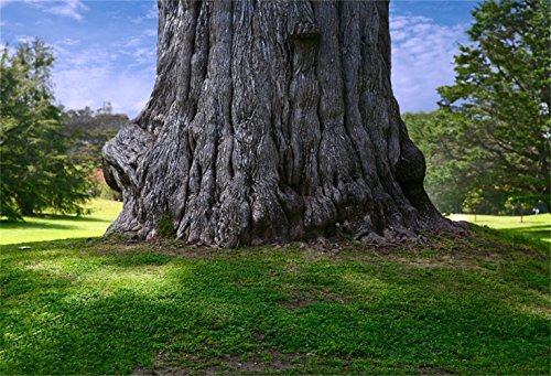- Laeacco Huge Tree Trunk Backdrop 8x6ft Vinyl Photography Background Summer Travel Tripper Backdrop Massive Tree Shade Grassland Background Scout Camp Hike Tourist Journey Outdoor Nature Scenery