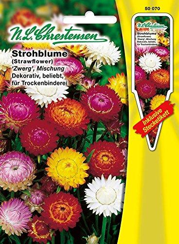 Strohblume ' Zwerg' dekorativ, beliebt, für Trockenbinderei ( mit Stecketikett) 'Helichrysum bracteatum' Chrestensen