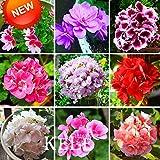 Nuovo arrivo! 20 pc / pacchetto di geranio Semi perenne fiore Semi Pelargonium peltatum Semi, 17 colori disponibili, # 95PCKP