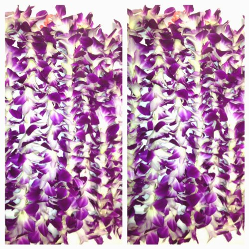 Fresh Hawaiian Flower Lei -Single Strand- Classic Purple Orchid Flowers- 10 Pack by Aloha Island Lei