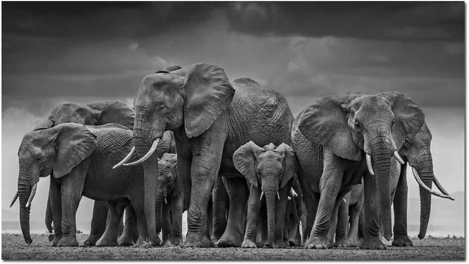 Wall Art black Elephant Canvas Prints Wall Art Animals Pictures to Photo Paintings Decor for Living Room Bedroom Home Decorations Modern Grace Grey Landscape Giclee Artwork (28x50inch The Circle)