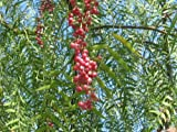 buy Pepper, California Tree, Schinus Molle, Pink Peppercorn, 10 Seeds! Groco now, new 2018-2017 bestseller, review and Photo, best price $4.50