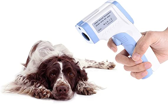 Accurate Veterinary Thermometer Dog
