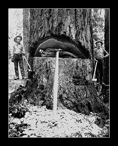 8 x 10 All Wood Framed Photo Lumber Jack Redwood Trees California
