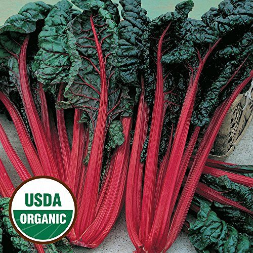 Everwilde Farms - 250 organic Ruby Red Swiss Chard Seeds