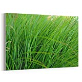 Westlake Art - Outdoor Grass - 5x7 Canvas Print Wall Art - Canvas Stretched Gallery Wrap Modern Picture Photography Artwork - Ready to Hang 5x7 Inch