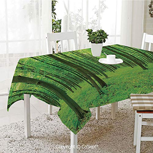 (SCOXIXI Spillproof Tablecloth,Sun Illuminating The Green Forest in Springtime Fresh Air Landscape Picture Print,Table Cloth for Kitchen Dinning Tabletop Decoration(60.23