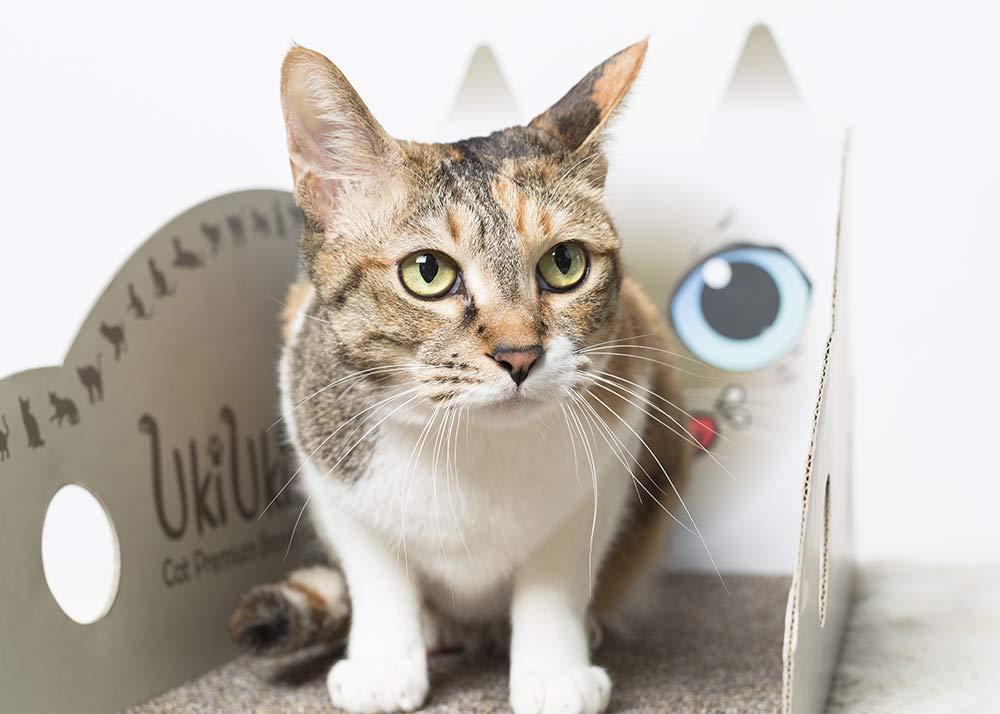 Brown (Siamese + Norwegian Forest) UkiUki Cat Carpet Scratcher DIY Cute Cat Scratcher and Furniture (Brown (Siamese + Norwegian Forest))