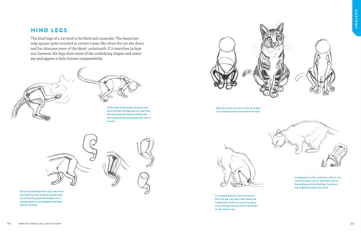 How To Draw Cats And Kittens A Complete Guide For Beginners JC Amberlyn 9781580935005 Amazon Books