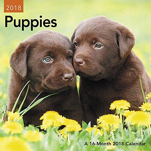 2018 Puppies Mini Calendar (Day Dream)