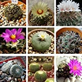 10PCS Hybrid Cactus Seeds Succulent Flower Seeds