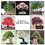 Bonsai Package 8 Packs Bonsai Tree Seeds Pine Maple Bonsai Seeds DIY Home Garden Combined Green Plants