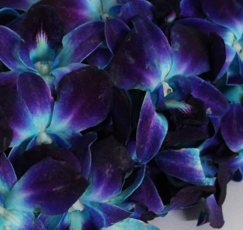 Athena's Garden Fresh Dyed Blue Cut Orchids Bunch with Vase with Glass by Athena's Garden (Image #4)